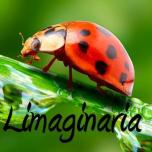 Limaginaria
